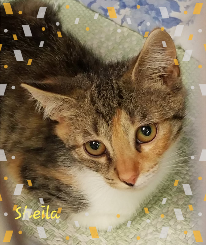Friends of the Orleans County Animal Shelter NYS Registered